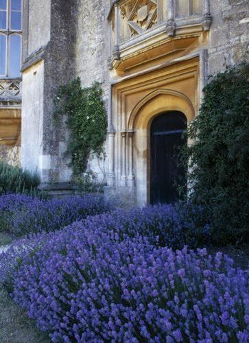 Pgds 20080325 133848 Ntpl 53085 Lacock Abbey Wiltshire